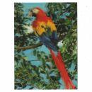 3D Lenticular Postcard - Parrot 2 - Postcard with effect