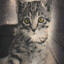 Lady Tank Top - Katze 3 schwarz