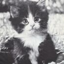 Lady Tank Top - Katze 4 schwarz